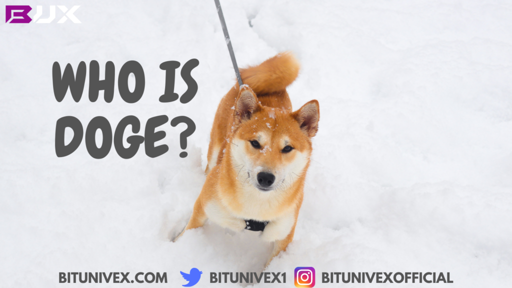 Who is doge?